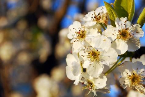 Spring Sights