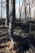 burned-ground